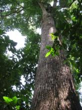 Использование полезных элементов в бацзы: Дерево
